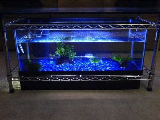 Aquarium fish tank coffee table 8 unique designs guide for Coffee table fish tank for sale