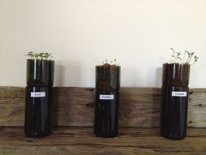 Wine Bottle Hydroponic Planter DIY