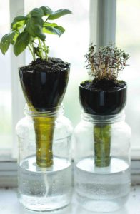 Wine Bottle Planters Instructions