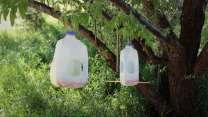 Homemade Milk Jug Bird Feeders