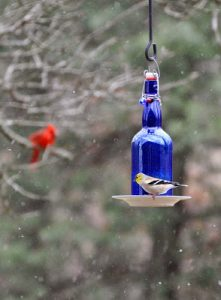 Wine Bottle Bird Feeder Perch