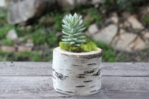 Log Planter Centerpiece