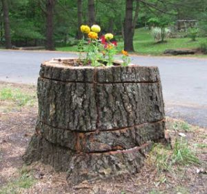 Stump Planter