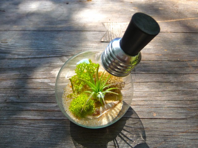 17 Light Bulb Terrarium Diy Ideas Guide Patterns