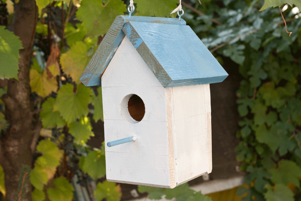 Nuthatch Birdhouse Plans
