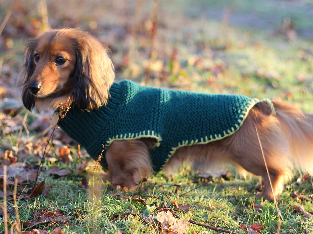 26 Free Crochet Dog Sweater Patterns | Guide Patterns