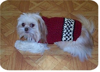 26 Free Crochet Dog Sweater Patterns Guide Patterns