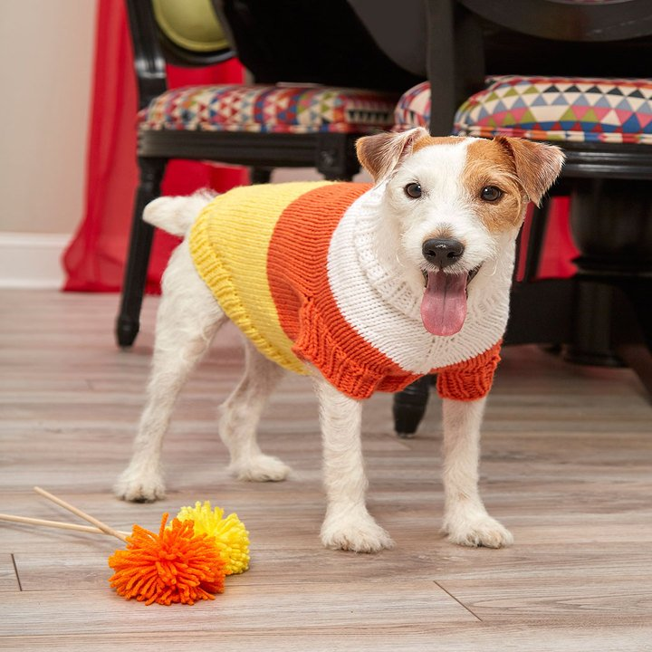 19 Dog Sweater and Coat Free Knitting Patterns | Guide ...