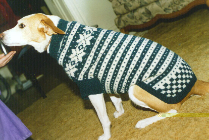 19 Dog Sweater and Coat Free Knitting Patterns | Guide Patterns