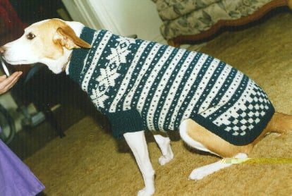 19 Dog Sweater And Coat Free Knitting Patterns Guide